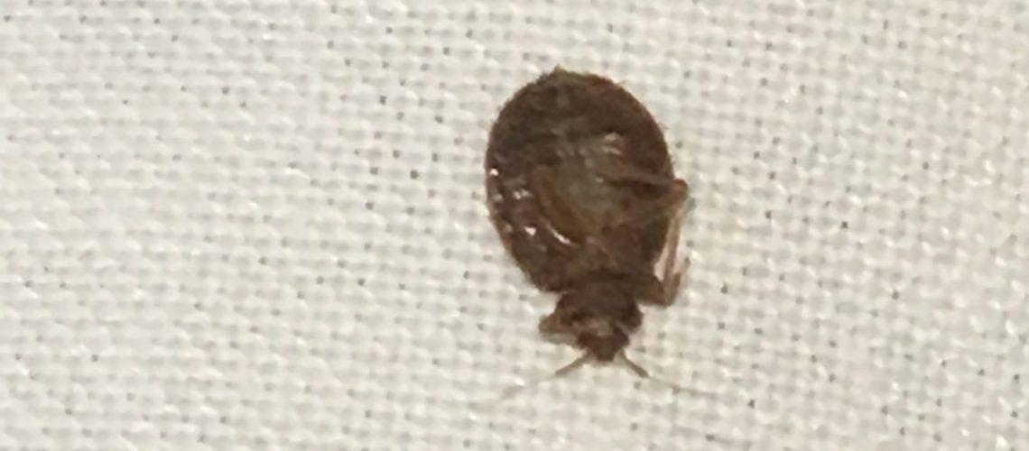 Rogers-bedbug-2
